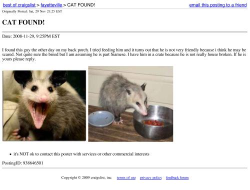best of craigslist : CAT FOUND!