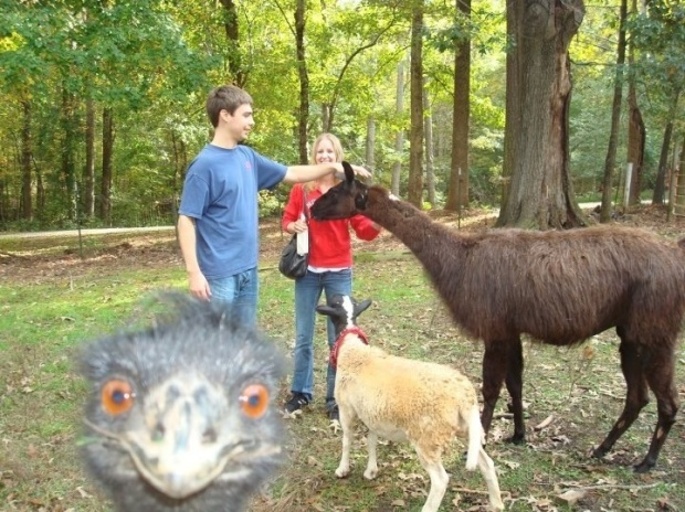 animalphotobombs2