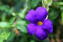 flower-210986_1280