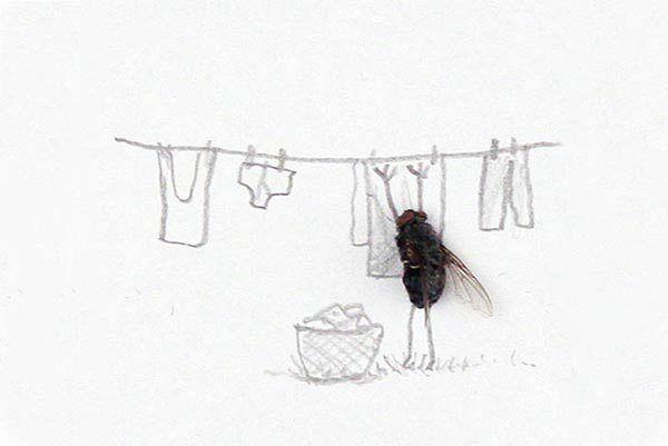 flies2