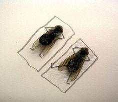 flies4